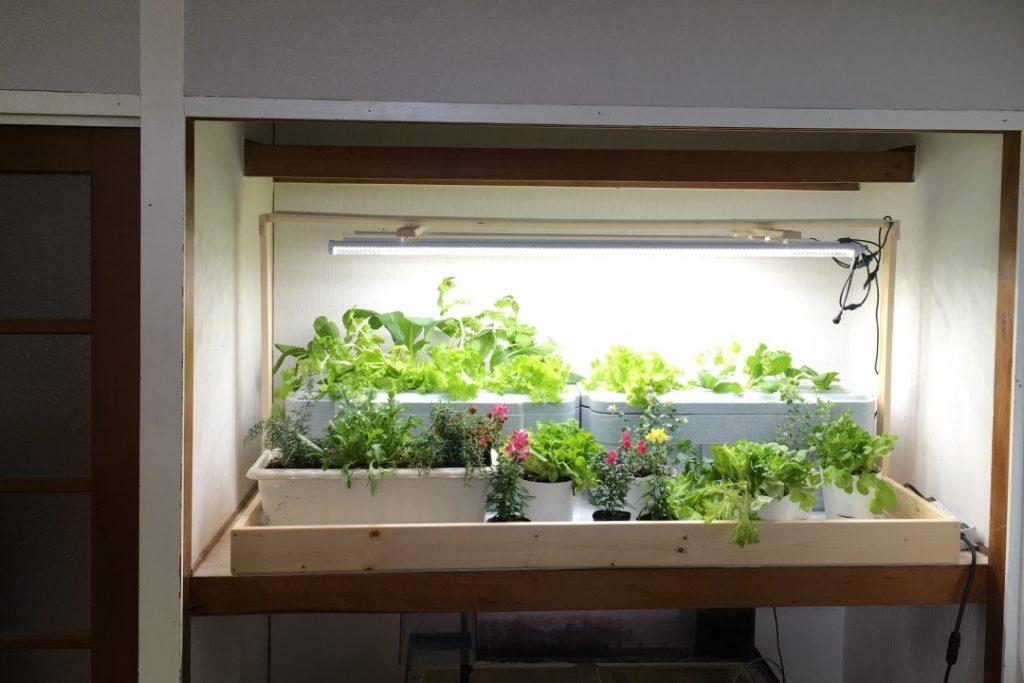 家庭用LED菜園キット、押入れ農園の販売
